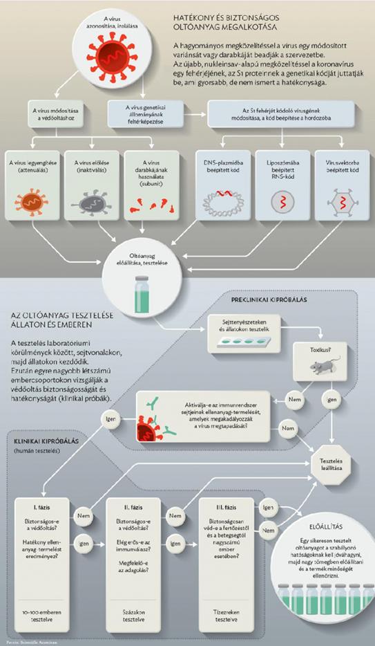 széles spektrumú enterobiosis gyógyszerek hogyan lehet gyógyítani a szemölcsöket egy nőnél