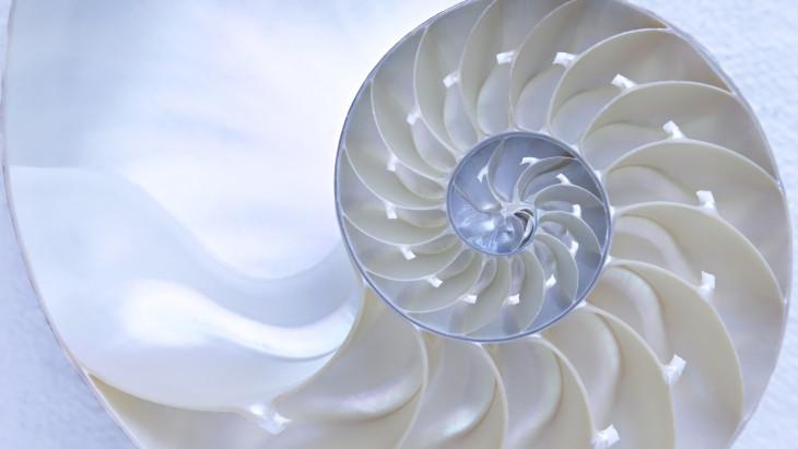 fibonacci kereskedésben)