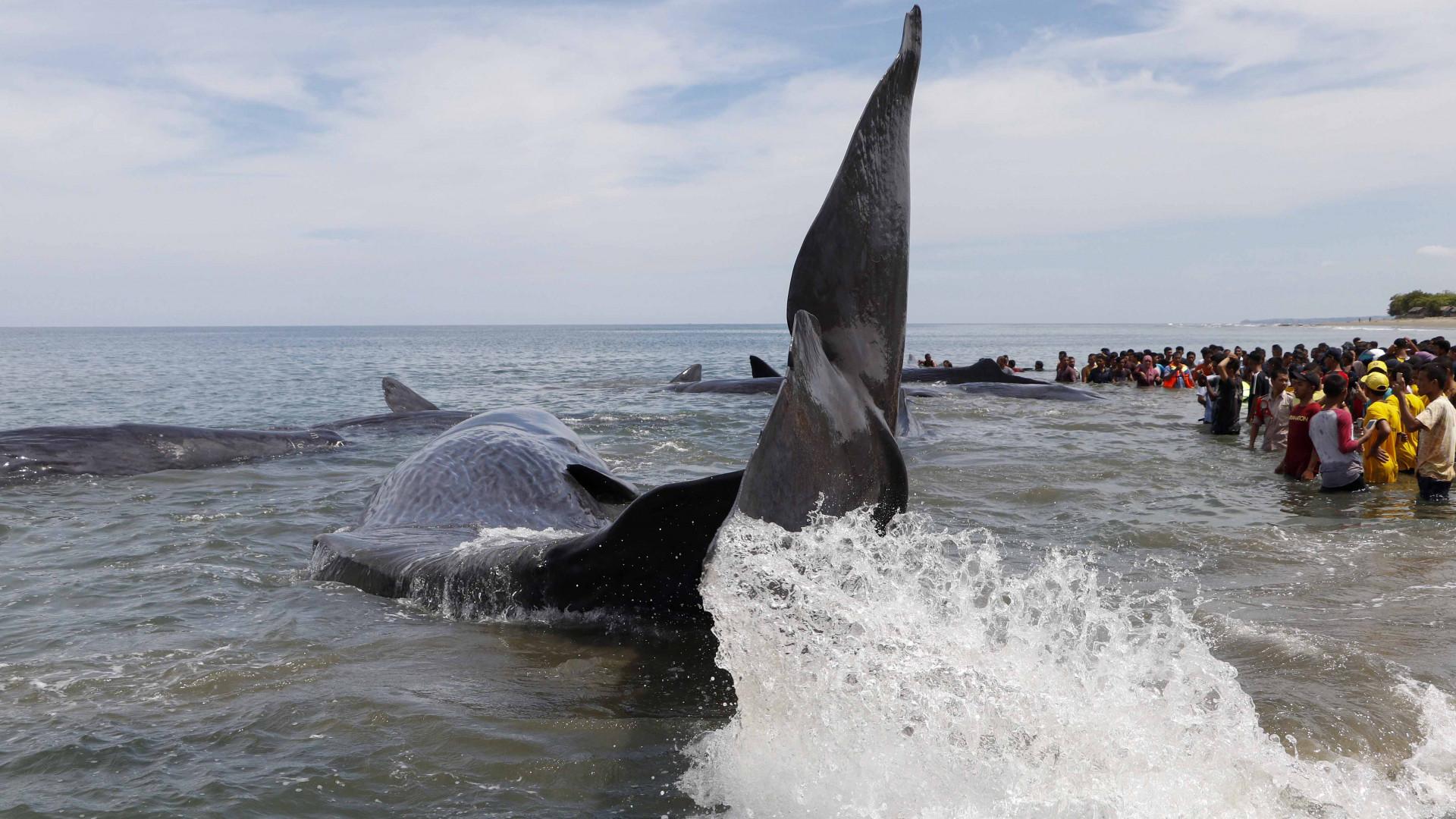 Újra rátenyerelt egy tőzsdei bálna a nagy vételi gombra