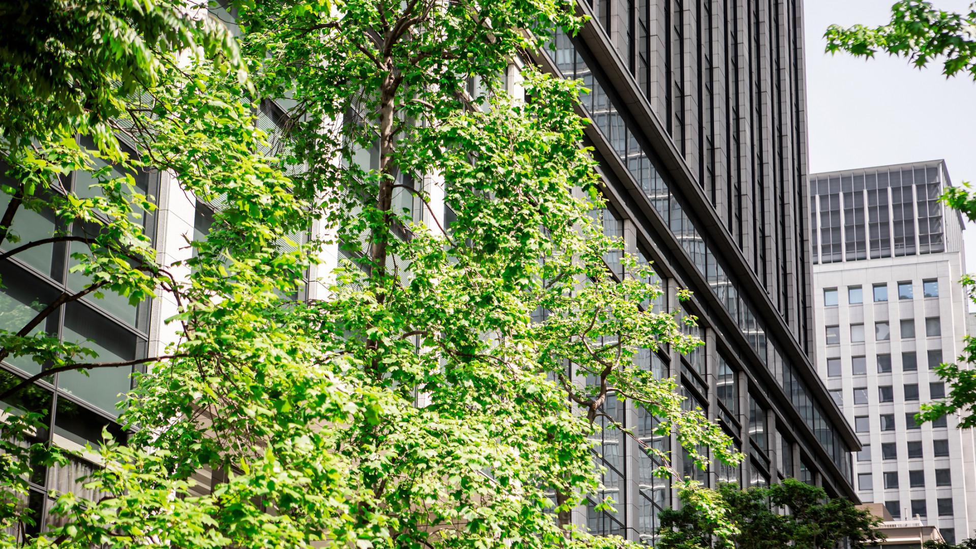 Teljes mértékben zöld energiára vált a közép-európai ingatlanóriás