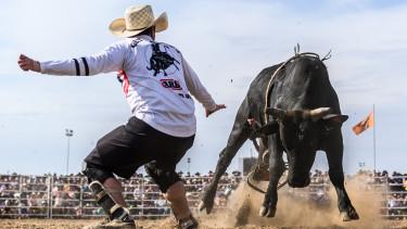 amerika bika reszveny
