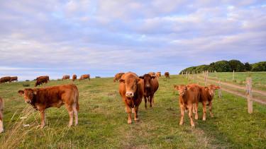 Az amerikai felnőttek 7%-a szerint a barna tehenekből jön a csokis tej