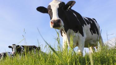Drágább lehet a tej - Figyelmeztetnek a szakértők