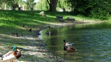 Drámaian csökkenhet a németországi madárállomány és erről az ember tehet