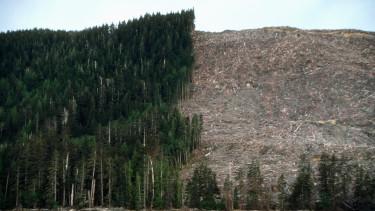 erdő erdőírtás favágás klímaváltozás globális felmelegedés