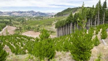 erdő faültetés