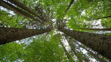 Erdősítésbe fektet a Shell - Több millió fát ültetnek