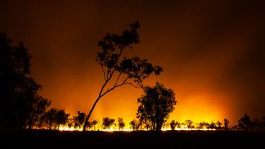 erdőtűz ausztrália