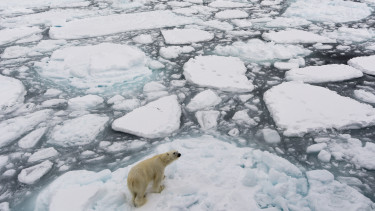 északi sark jegesmaci getty stock