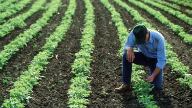 föld munkás zöldség getty stock