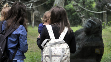 fővárosi állatkert járvány