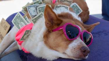gazdag milliomos vagyon kutya pénz nyaralás utazás getty stock