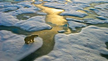 globális felmelegedés jegesmedve jégtábla