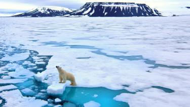 globális felmelegedés klíma klímaváltozás medve