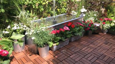 kert növények