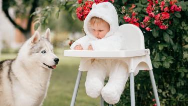 kisbaba kutyával