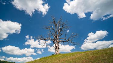 kiszáradt fa klímaváltozás magyarország domb felhő