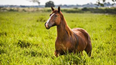 ló paci mezőgazdaság farm