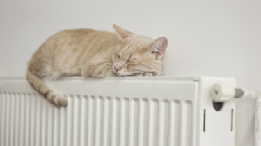 macska rezsi