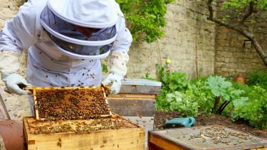 Méhészek méztermés