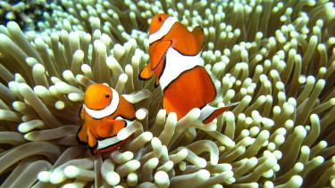 nagy-korallzatony