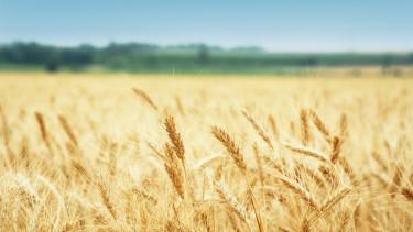 Nemcsak a klímát, az ételeinket is tönkreteszi a szén-dioxid