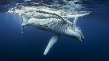 óceán hal tenger víz felmelegedés