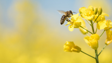 Olyan csodát tehet a napenergia a méhekkel, amivel mindenki nyerhet