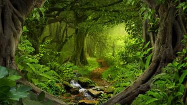 Öreg okostelefonokkal menthetik meg az esőerdőket