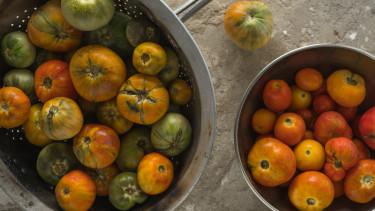paradicsom Tomato brown rugose fruit virus