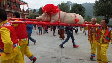 People carry a pig in weight of 150 kg