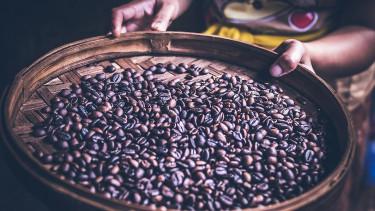 Retteghetnek a kávéivók, kipusztulás fenyegeti a kávébabot