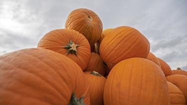sütőtök szüret ősz