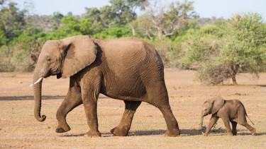 Történelmi lépésre készül Kína - Az elefánt éve lehet 2018?