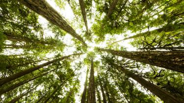 tree fa erdő