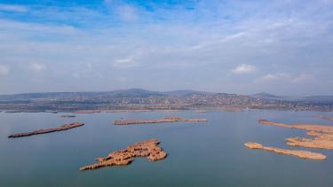 velencei tó hal