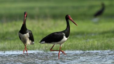 vizes elohely unios palyazat tamogatas nemzeti park