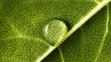 zöld környezet levél