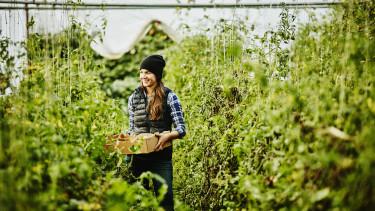 zöldség termesztés mezőgazdaság növény paradicsom