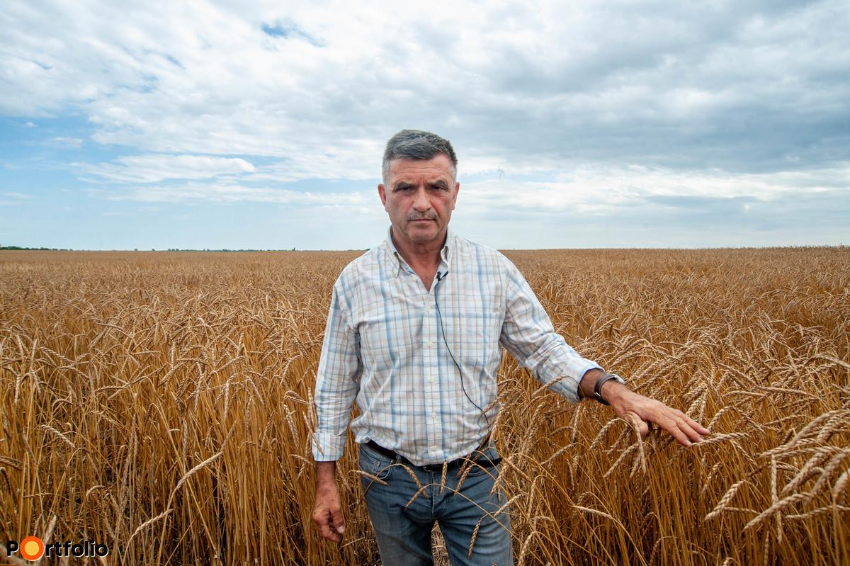 A Szakmári Gabona Kft. egyik tulajdonosa, Bévárdi Pál szerint irányt váltott a magyar búza a 90-es évek közepén.