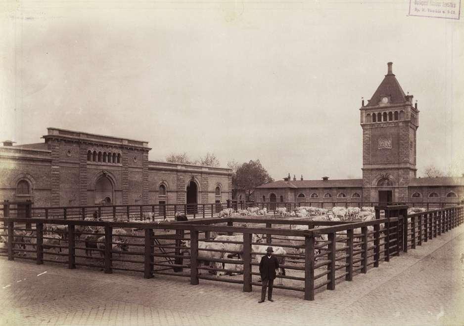 (1890 körül) Közvágóhíd, Forrás:  Fortepan , Budapest Főváros Levéltára. Levéltári jelzet, HU.BFL.XV.19.d.1.07.160